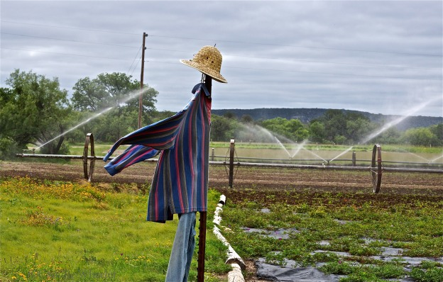 The Native American Seed farm serves as a research laboratory, with seeds harvested from off-site locations growing in fields protected by scarecrows wearing straw hats and colorful, long-sleeve shirts.