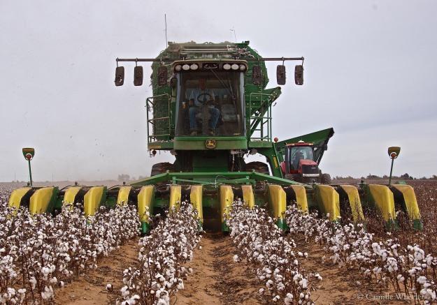 cotton stripper wm